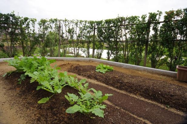 庭に設けた家庭菜園用のスペース